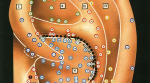 Точки аурикулярной акупунктуры (эр-чжень-ляо)